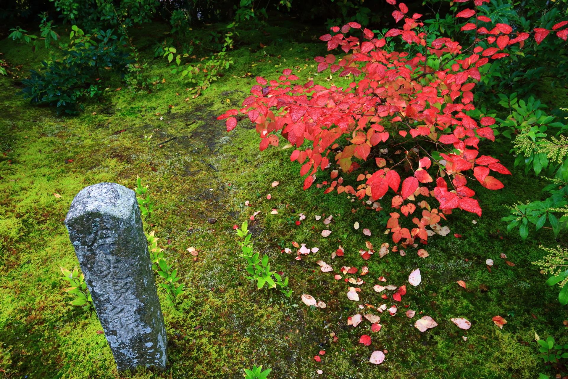 もみじの木以外の朱色の紅葉