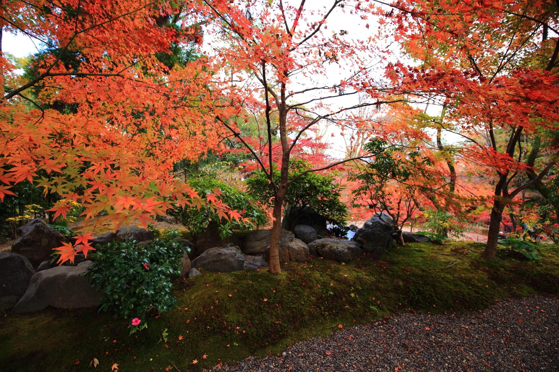 淡く優しい紅葉と苔の風景