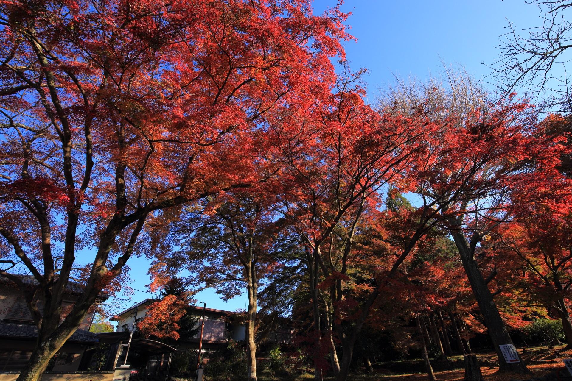 鷺森神社の素晴らしい紅葉と秋の情景