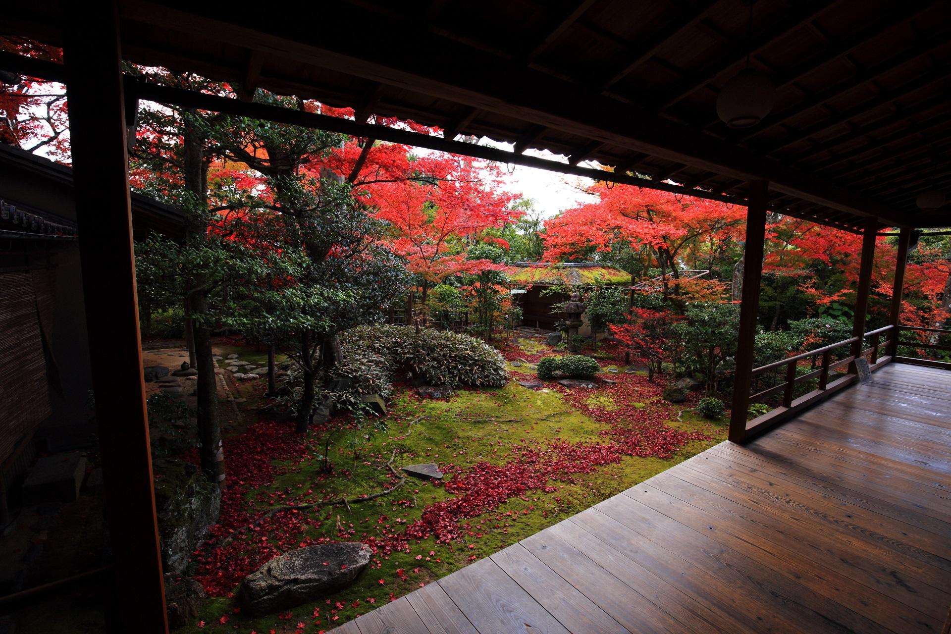 妙心寺大法院の鮮やかに染まる露地庭園の紅葉