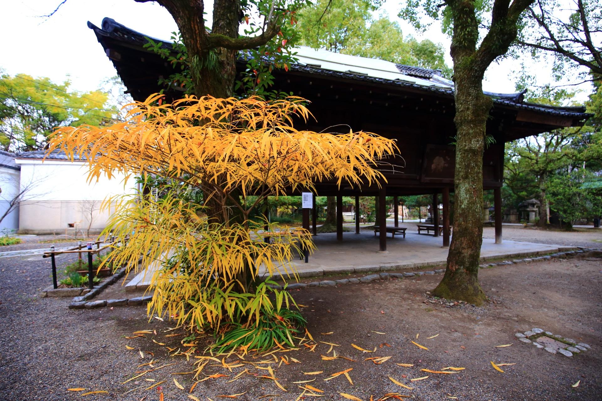 上御霊神社の綺麗に黄色く色づく笹の葉