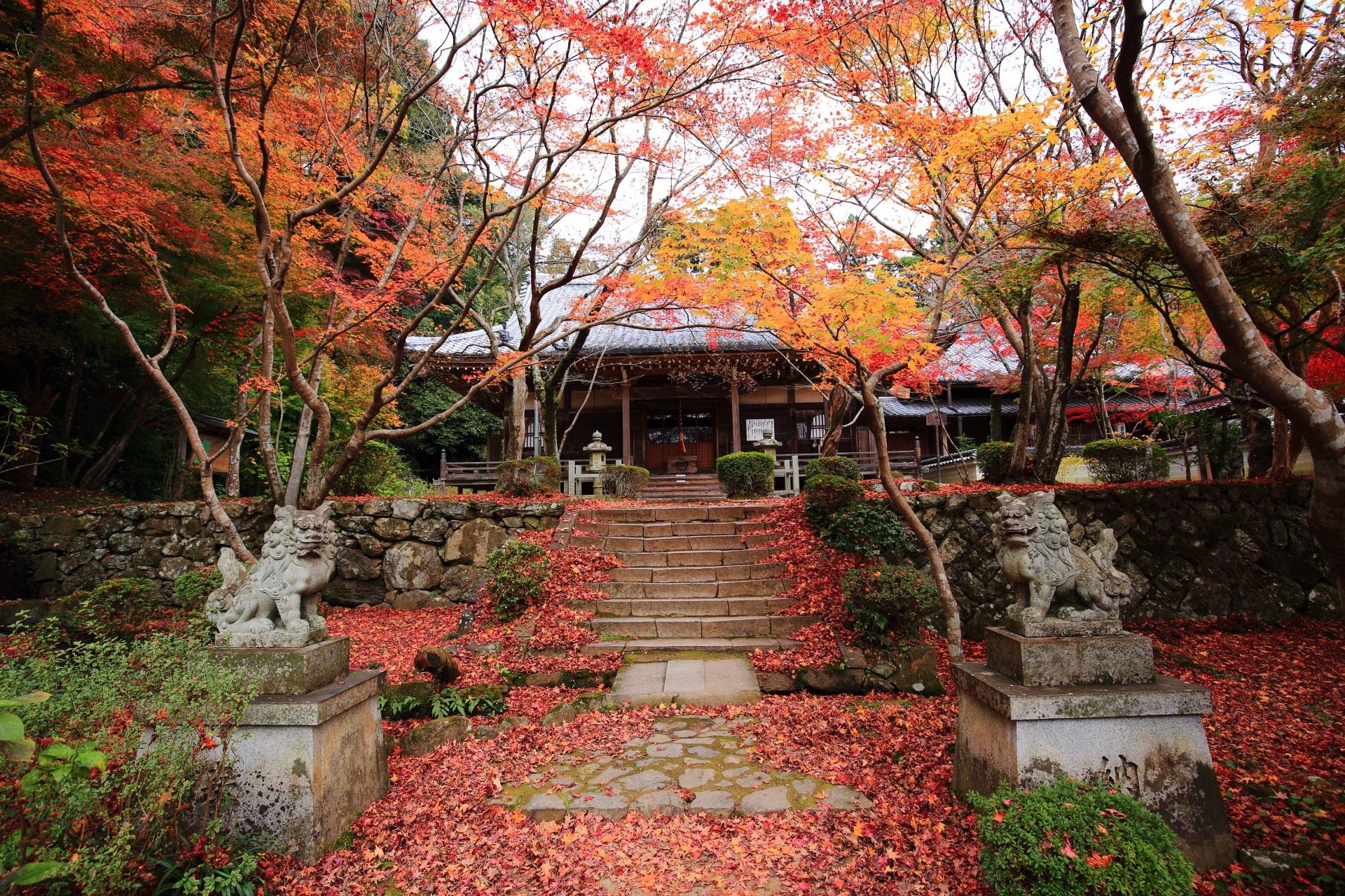 秋色が溢れる勝持寺の本堂(阿弥陀堂)と紅葉