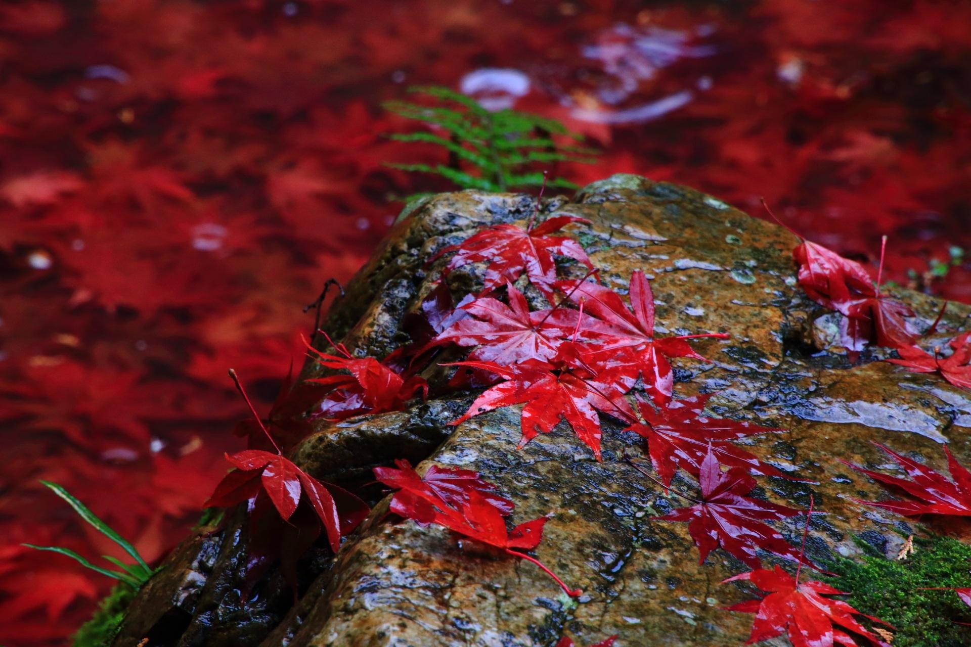 情緒たっぷりの秋の小さな風景