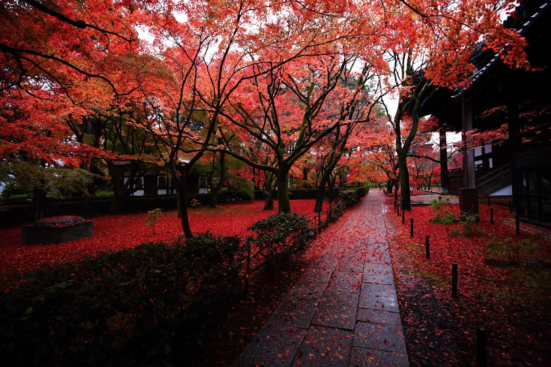 真如堂の本堂裏の参道の絶品の紅葉と散りもみじ