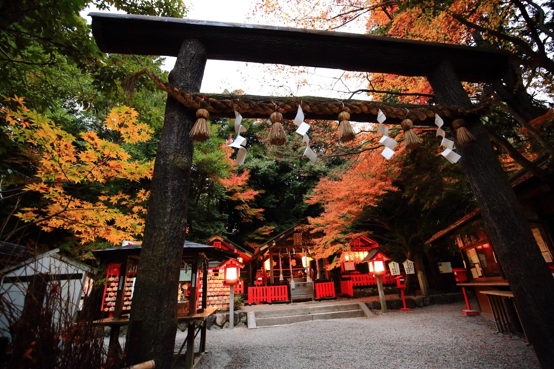 紅葉に染まる黒木鳥居と本殿