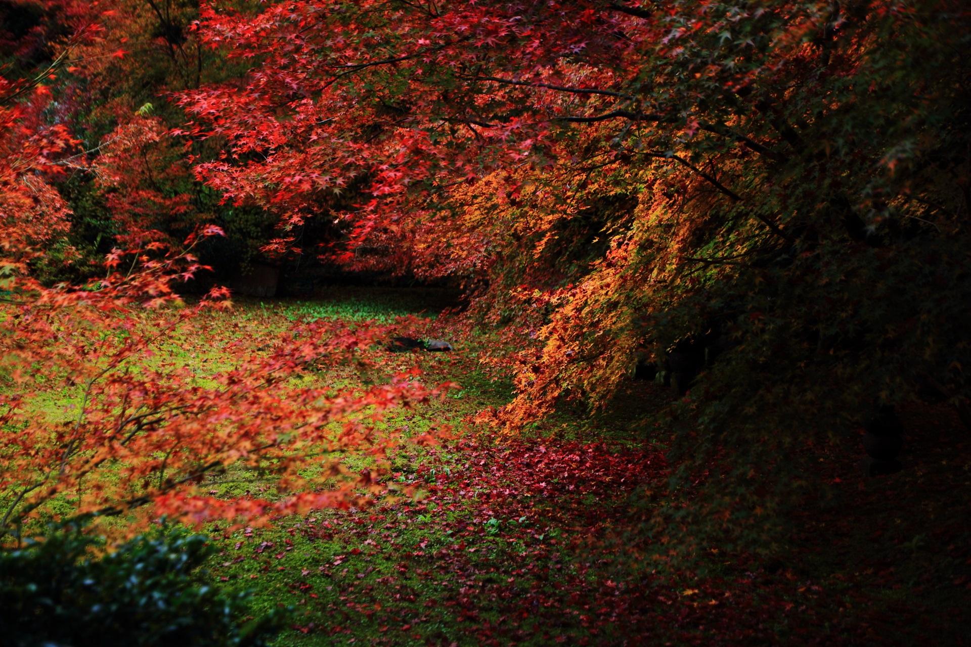 実相院門跡の「床紅葉」前の多彩な紅葉