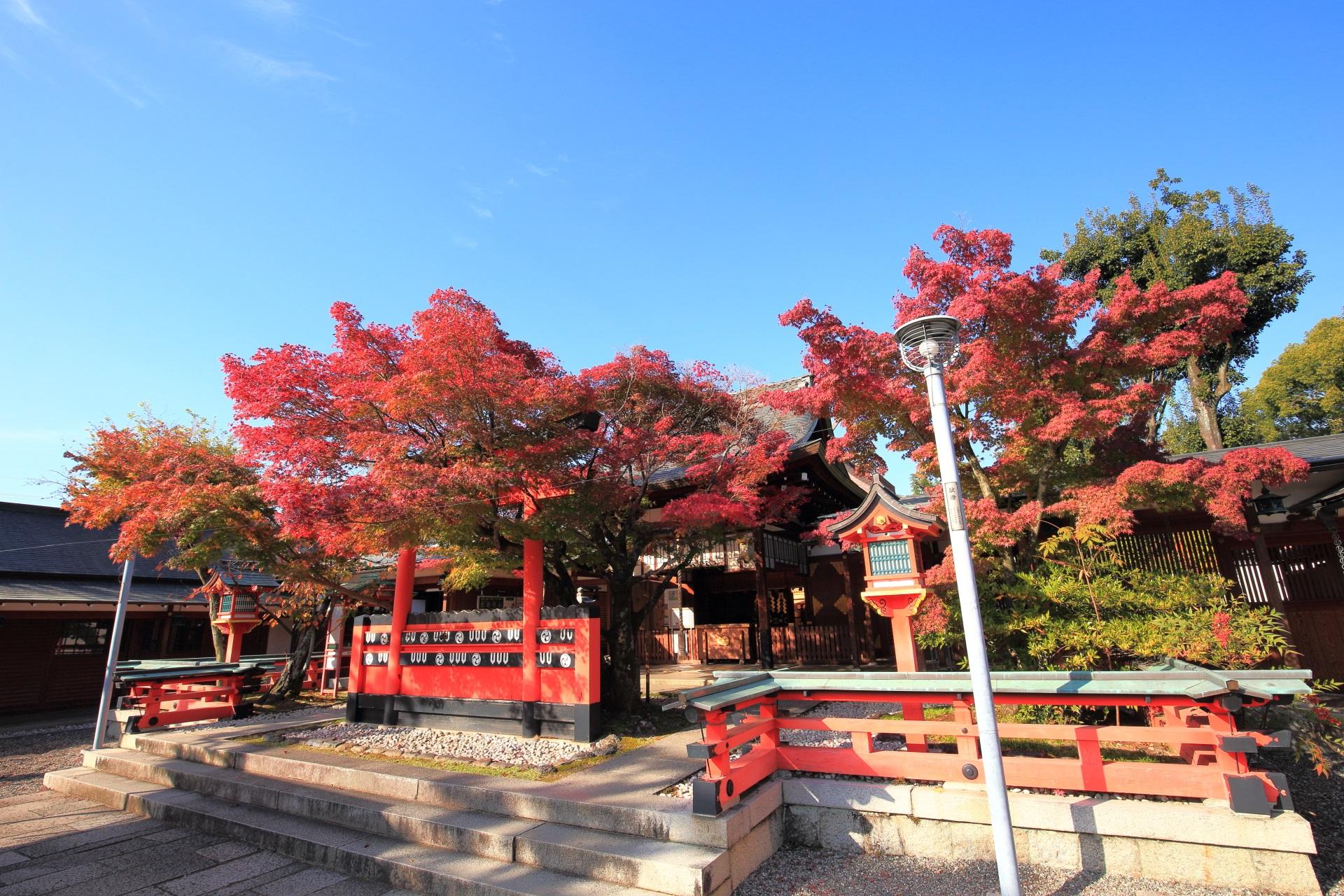 車折神社の本殿と本殿前の鳥居と鮮やかな紅葉