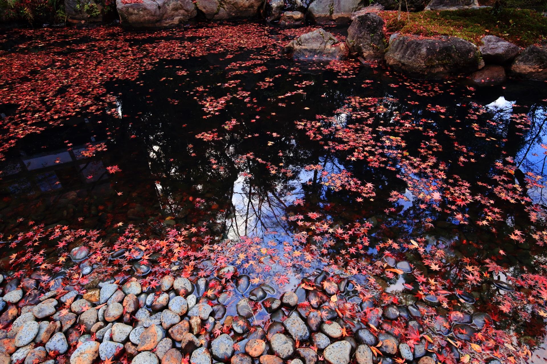長岡天満宮の水面を彩る華やかで上品な散りもみじ
