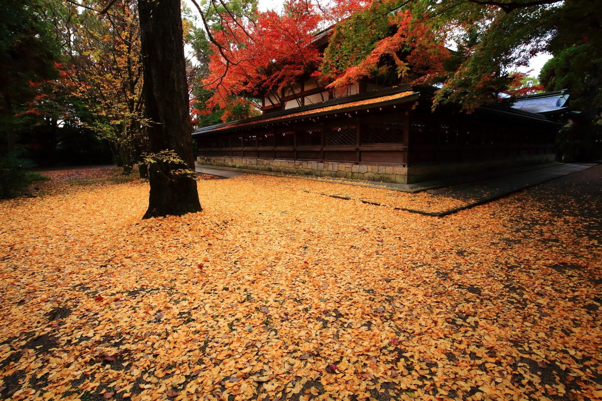 上御霊神社の素晴らしい散り銀杏や紅葉と秋の情景