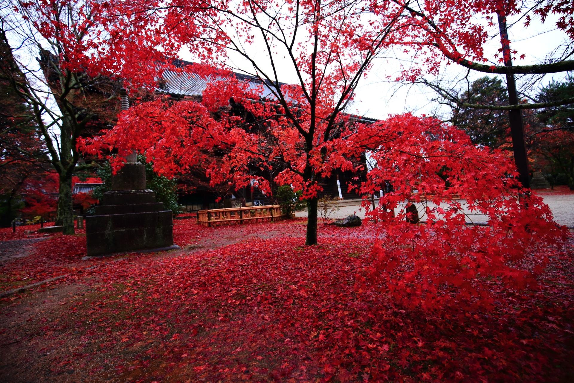 高画質 写真 散り紅葉 真如堂