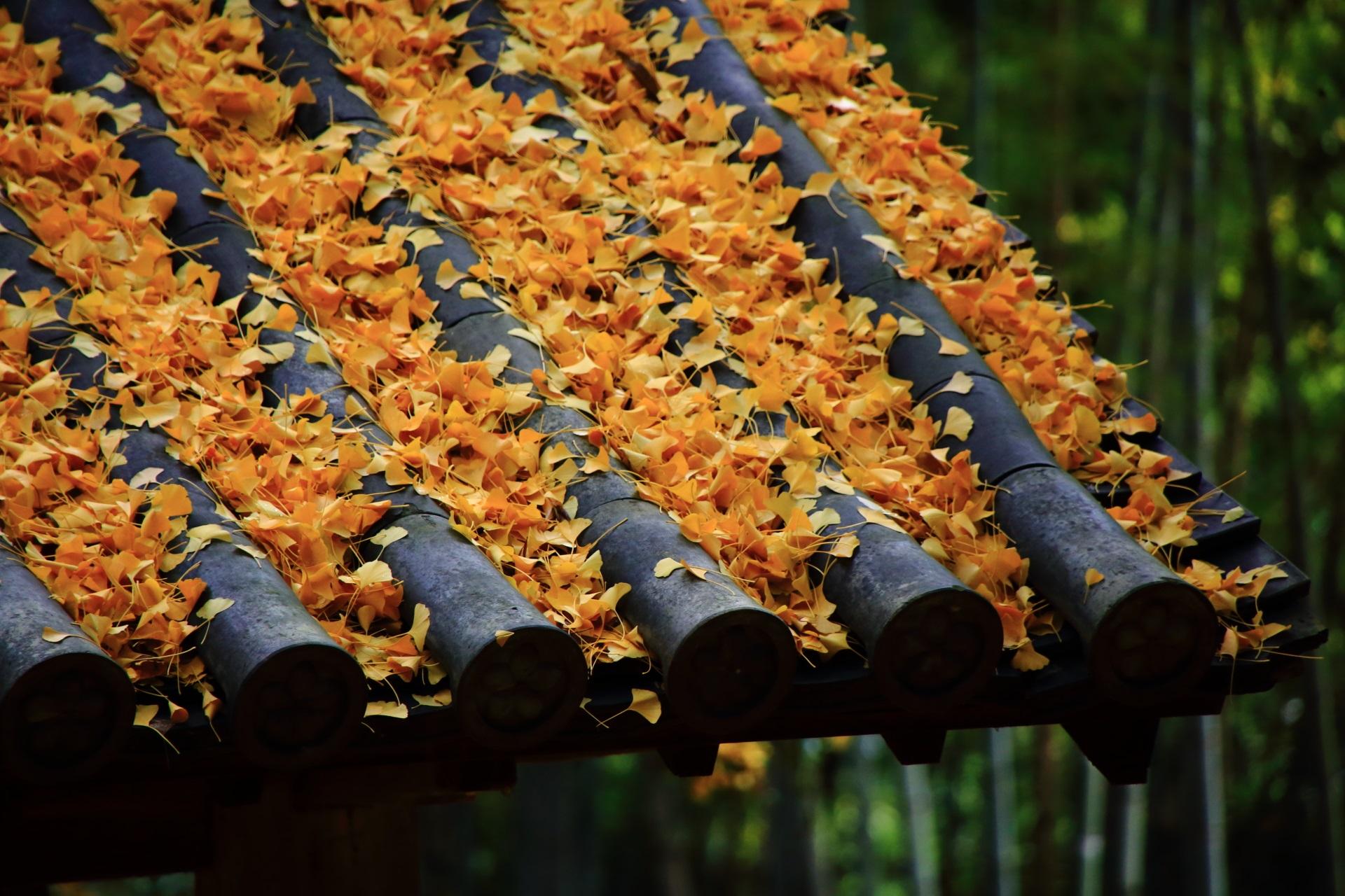 こぼれんばかりに積もる散った銀杏の葉