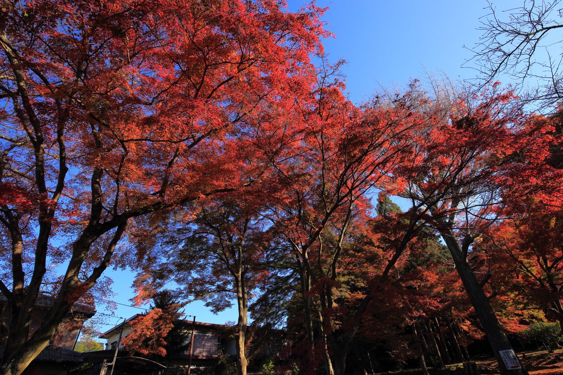 眩い紅葉が溢れる鷺森神社