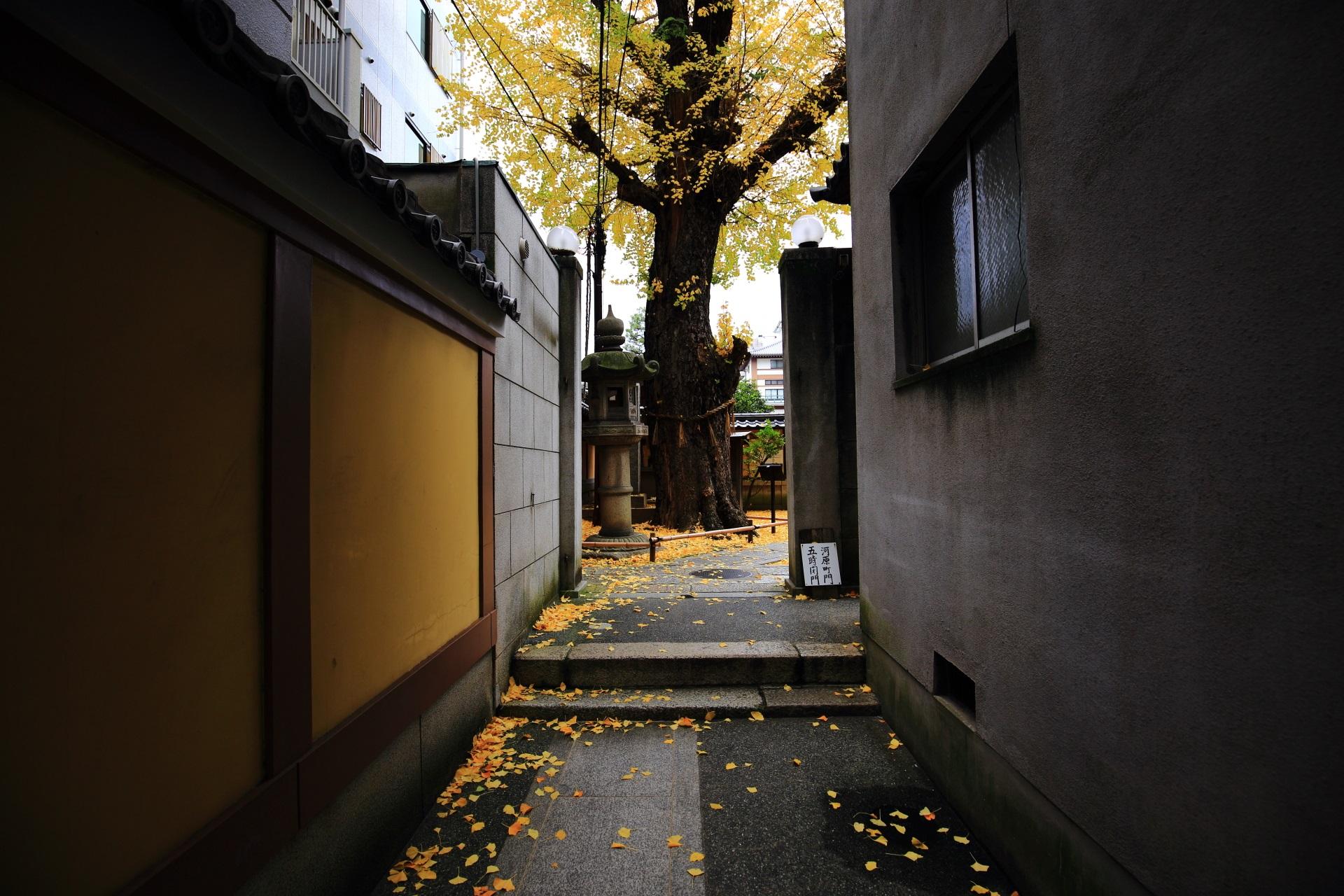 河原町通側の入口からも見える本能寺の大銀杏
