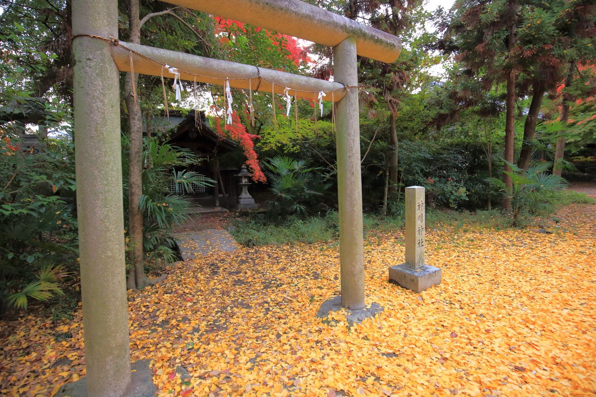 散り銀杏につつまれる上御霊神社の神明神社