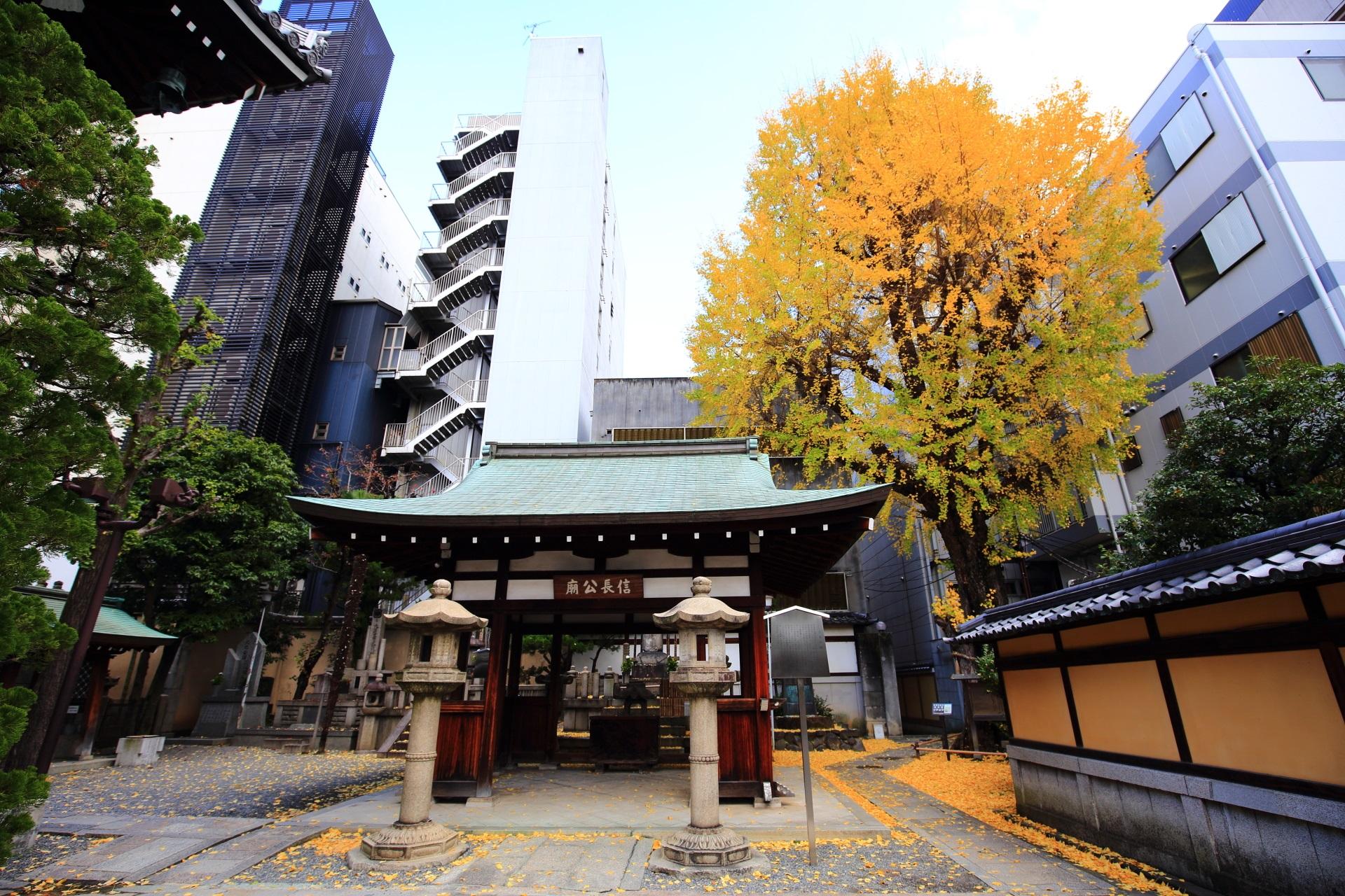 本能寺の素晴らしい銀杏と散り銀杏と秋の情景