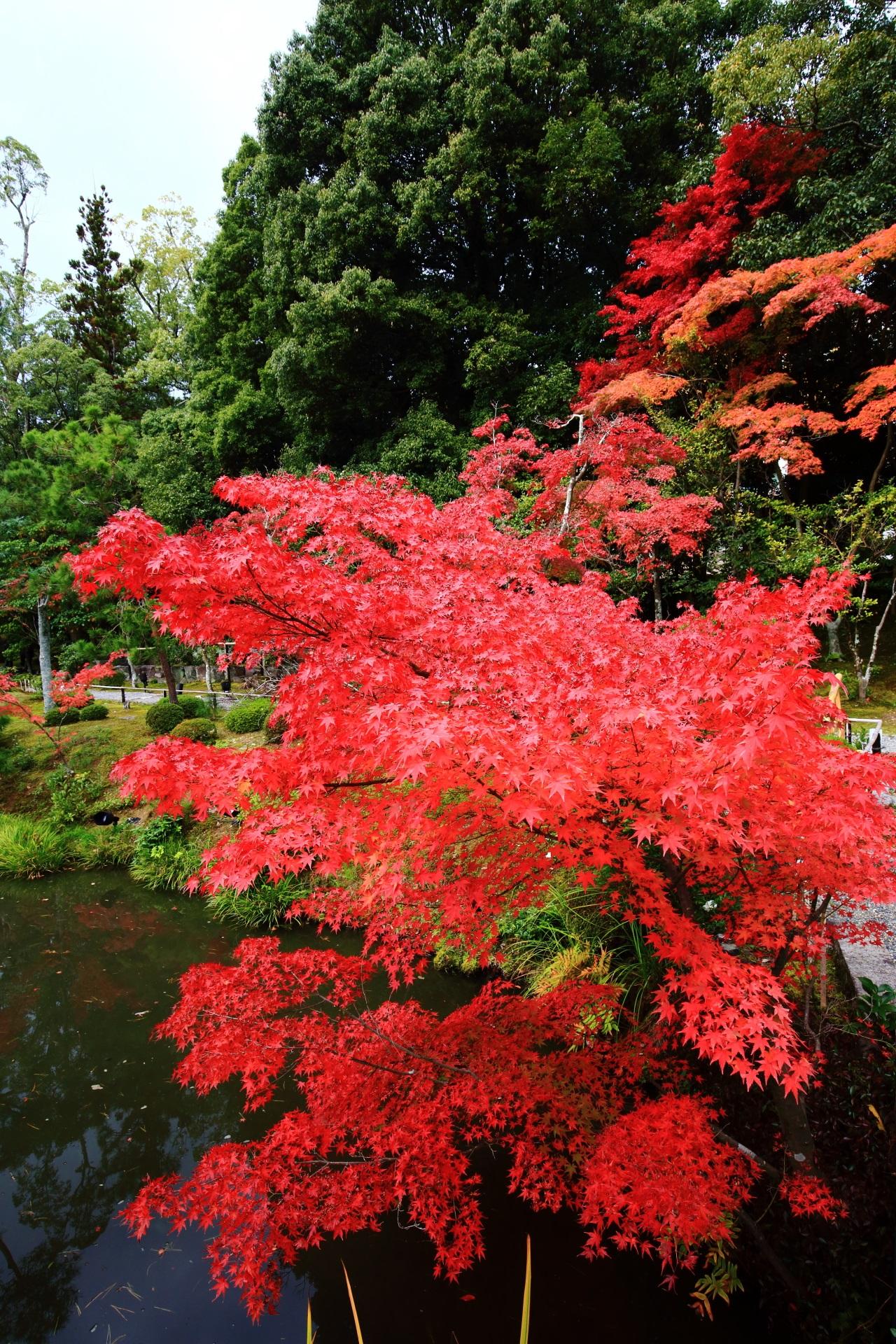 等持院の水辺を彩る見事な秋色