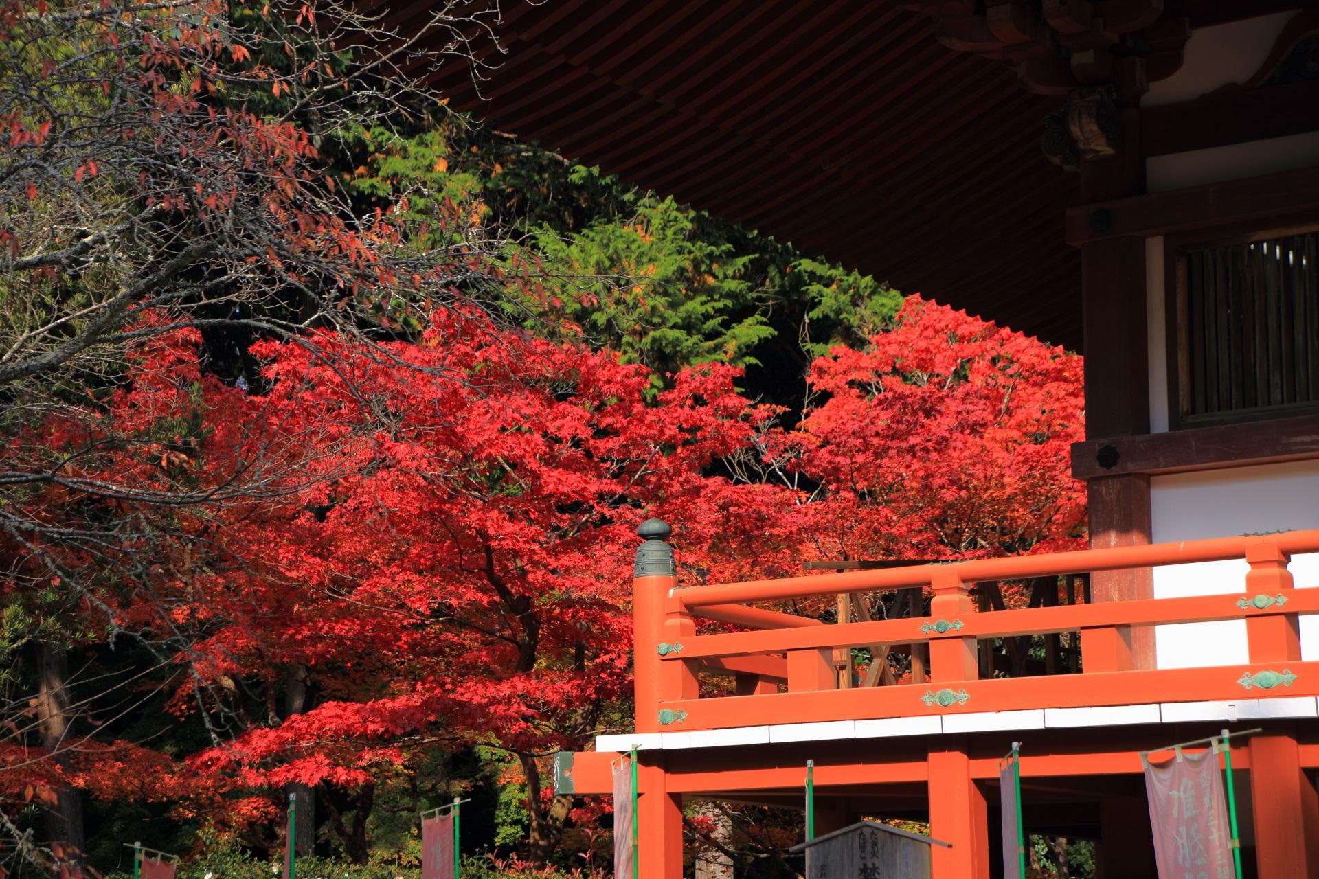 観音堂の鮮やかな色合いの見事な紅葉