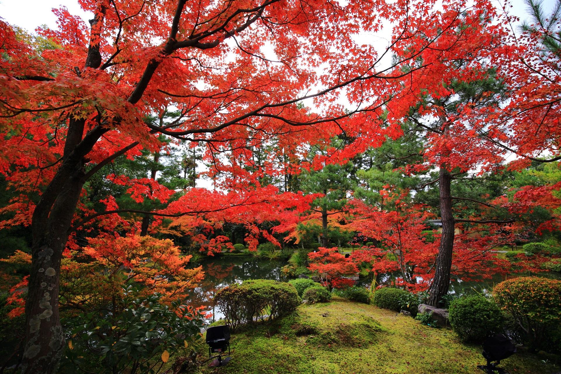 等持院の蓬莱島から眺めた極上の秋色の空間
