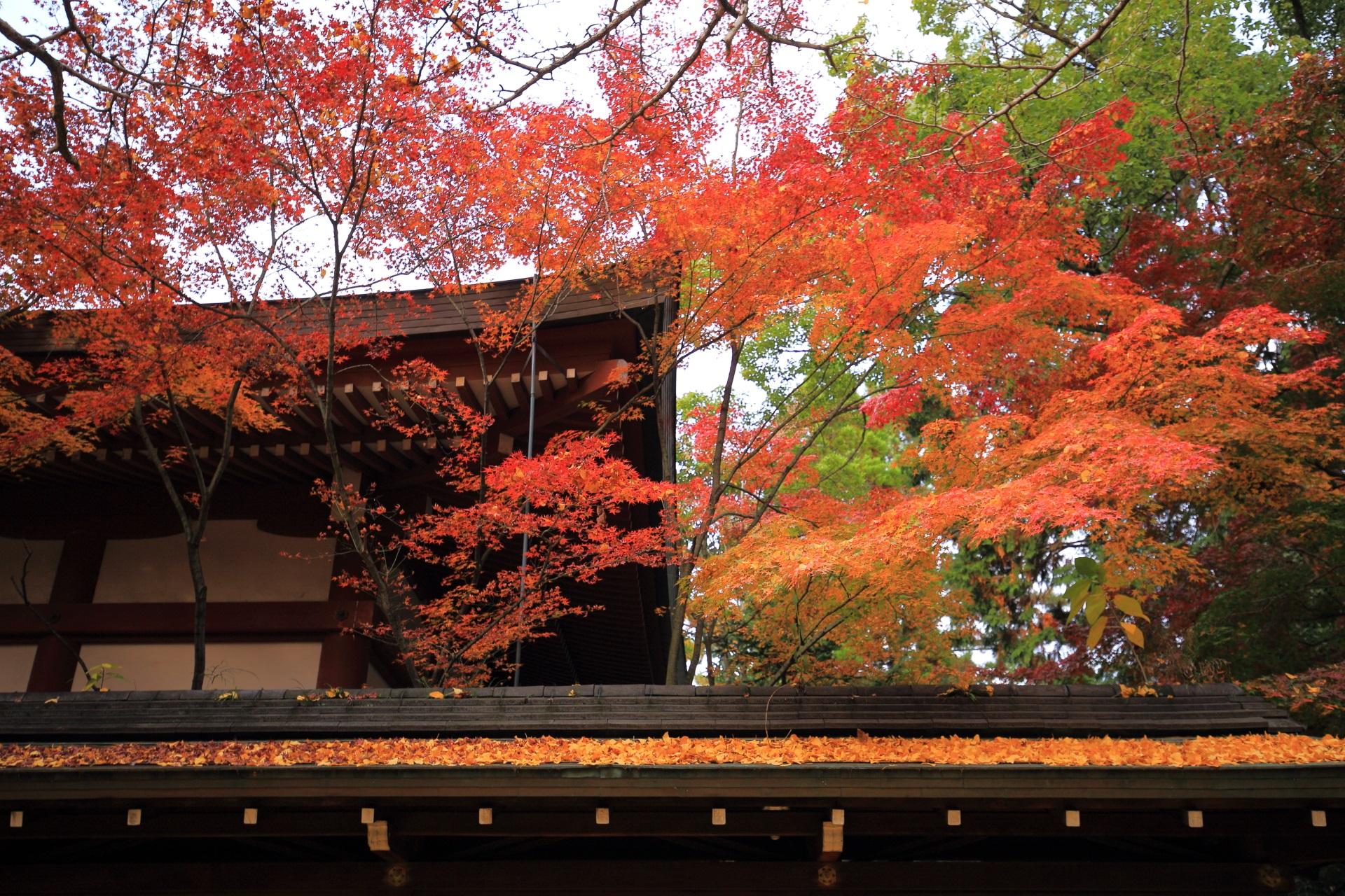 本殿を秋色につつむ上品な紅葉
