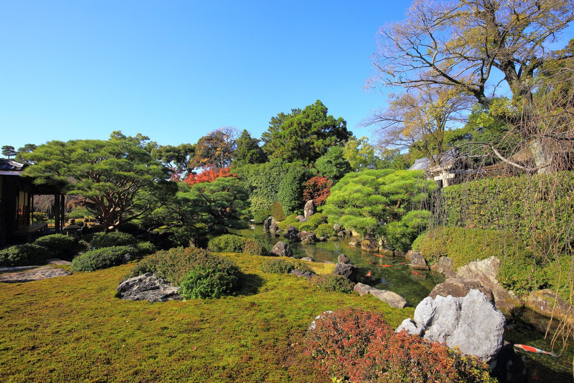 緑も綺麗な「室町の庭」
