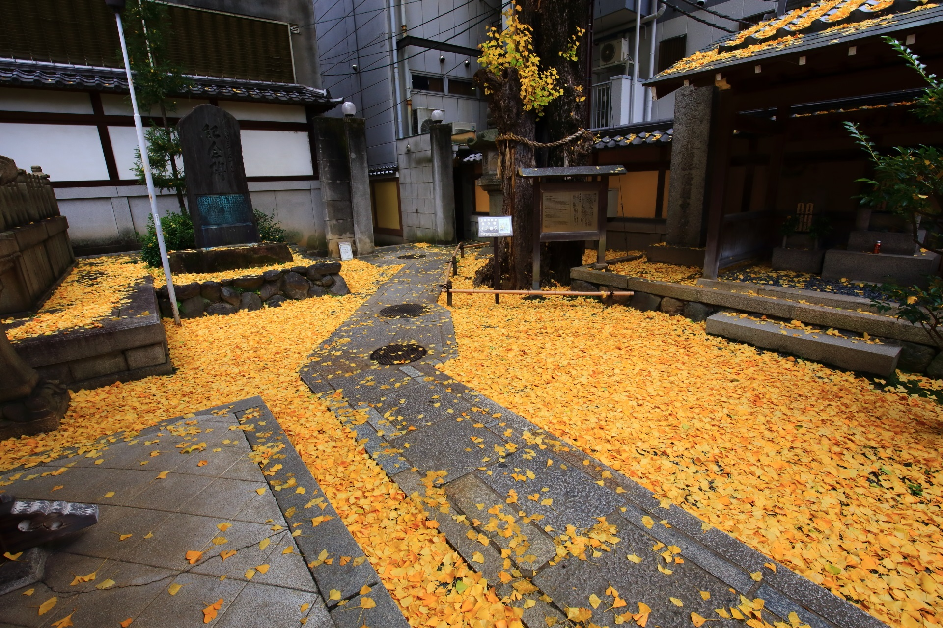 高画質 写真 散り銀杏 本能寺