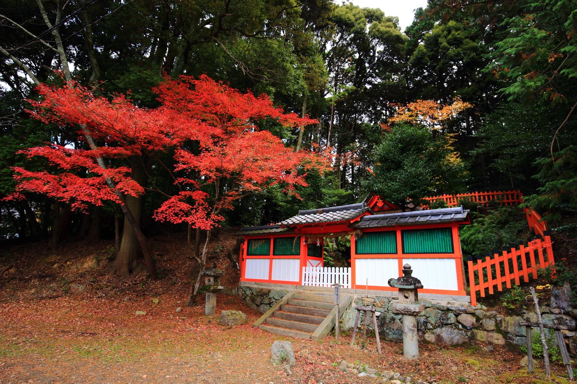 若宮社と豪快に色づく紅葉