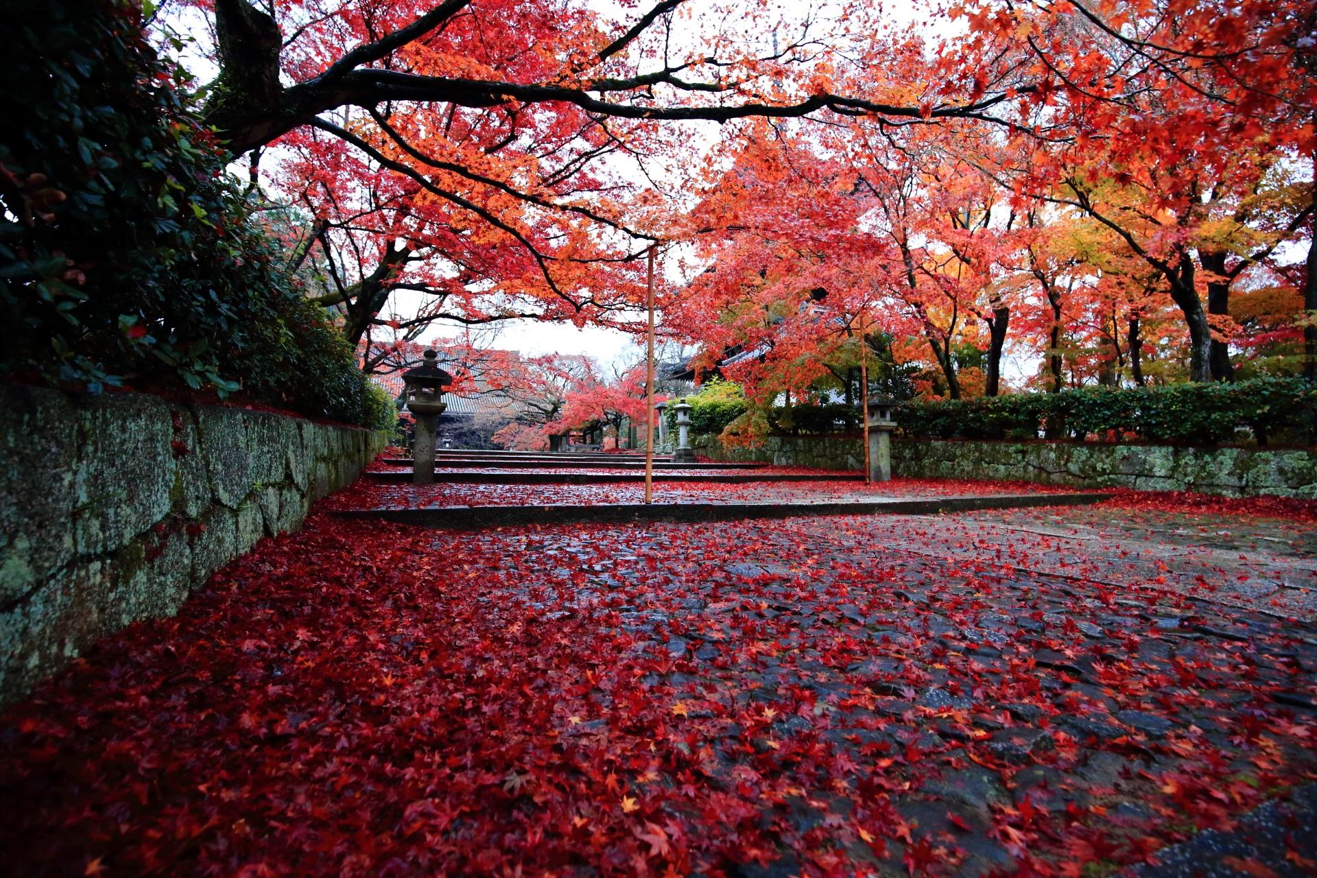 鮮烈な色合いの赤い散りもみじ
