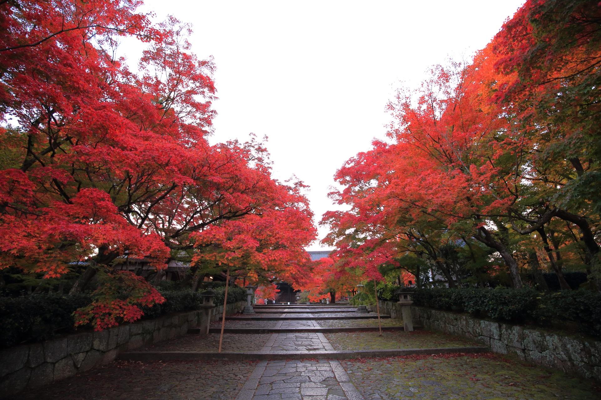 真如堂の参道の溢れる紅葉