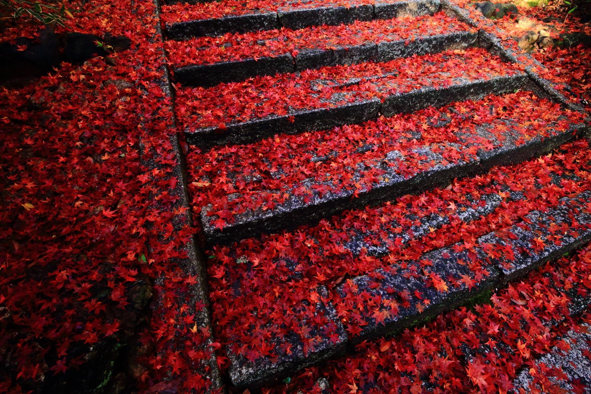 今宮神社 高画質 散り紅葉 写真