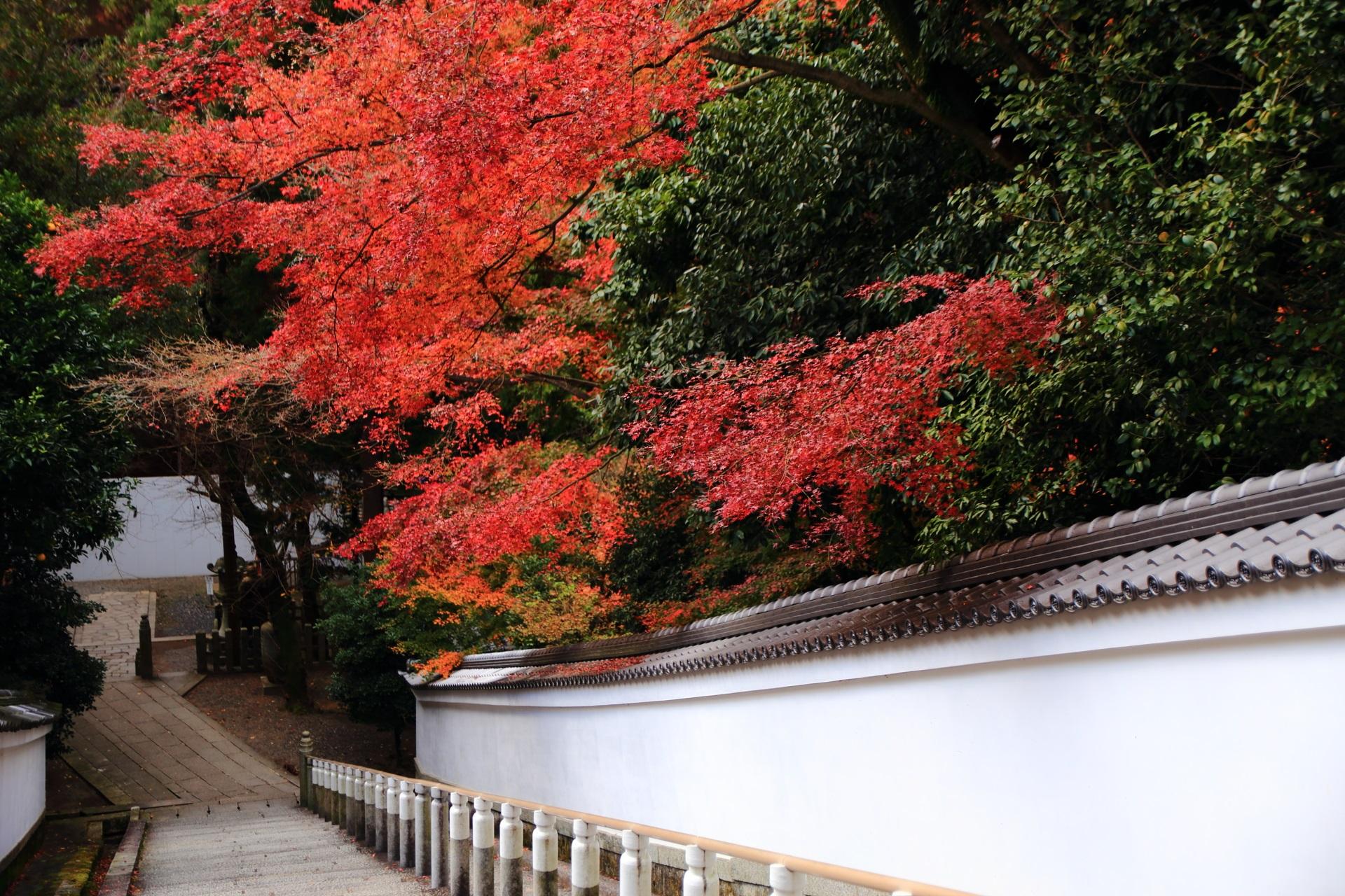 知恩院の風情ある絵になる石段と紅葉