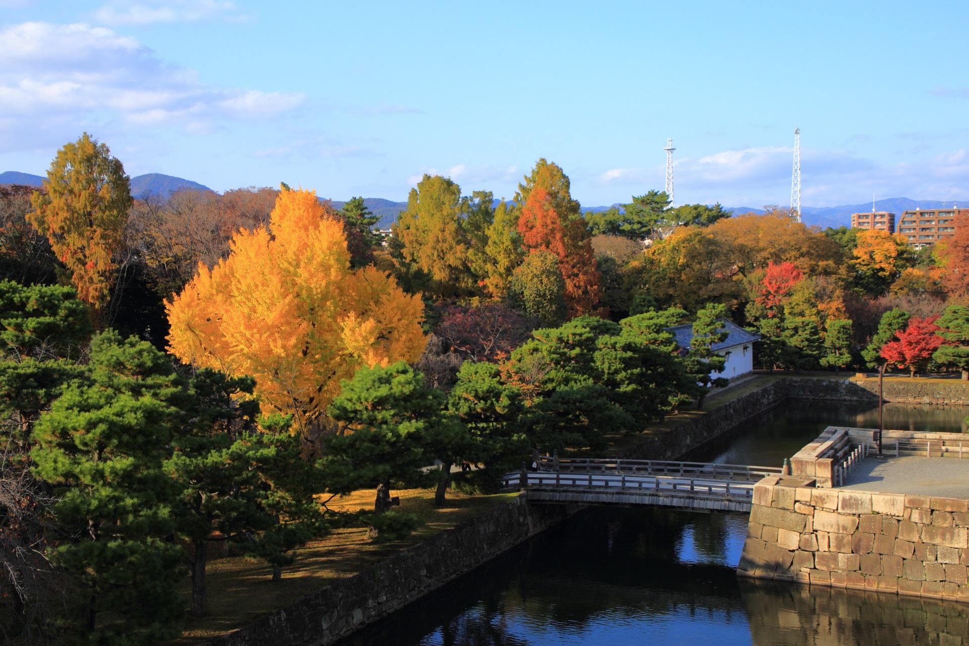 天守閣跡から眺めた秋の城内と圧倒的な銀杏