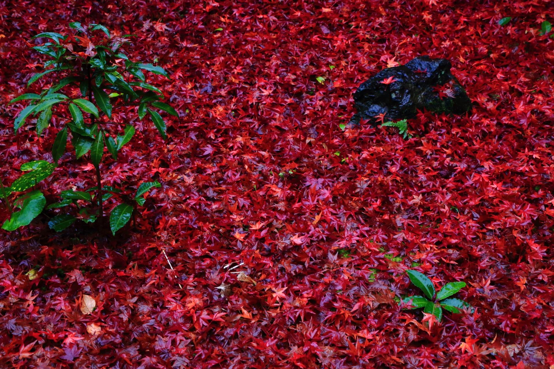 石や植物が演出するふかふかの紅葉の絨毯