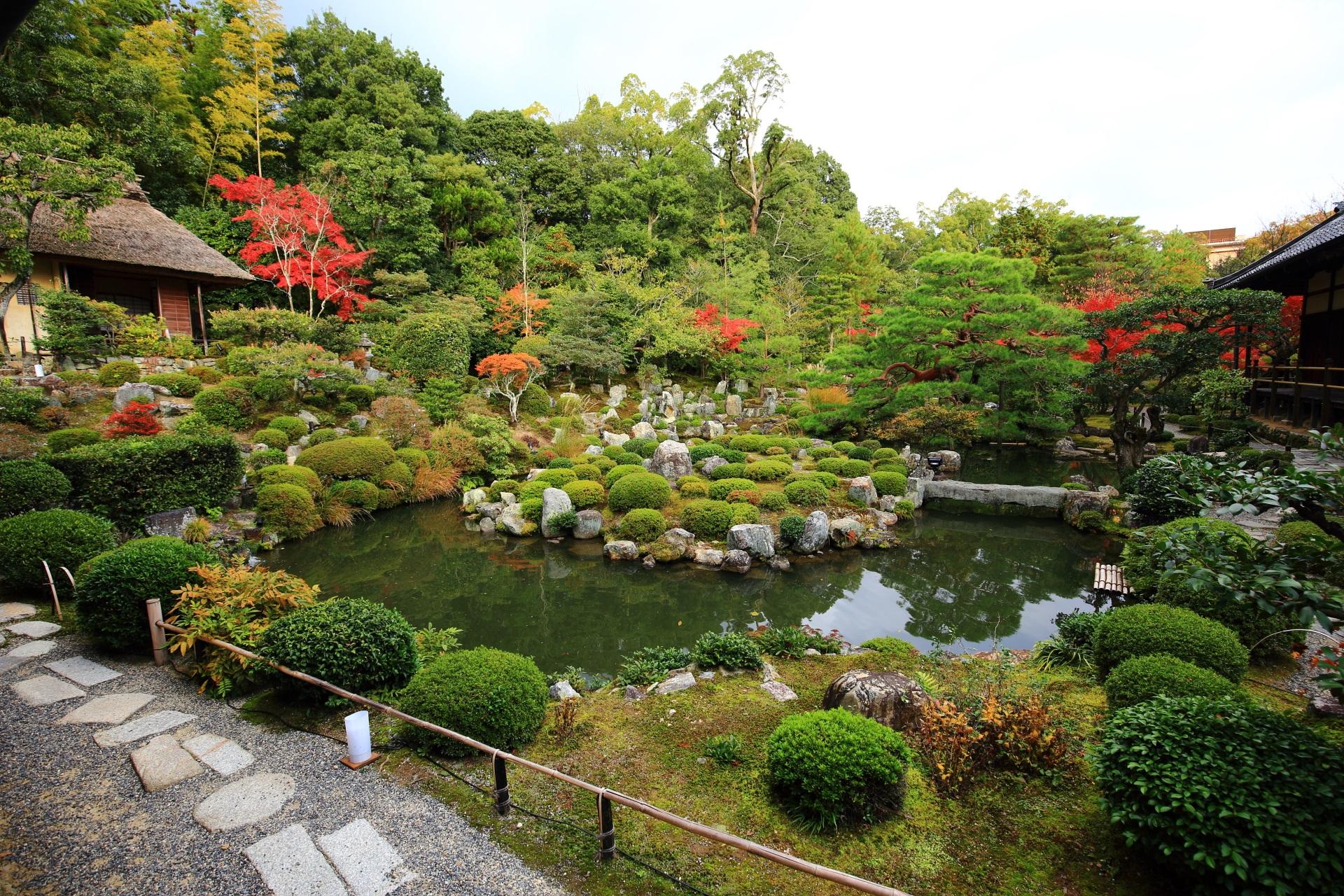 等持院の芙蓉池の緑に映える赤い紅葉