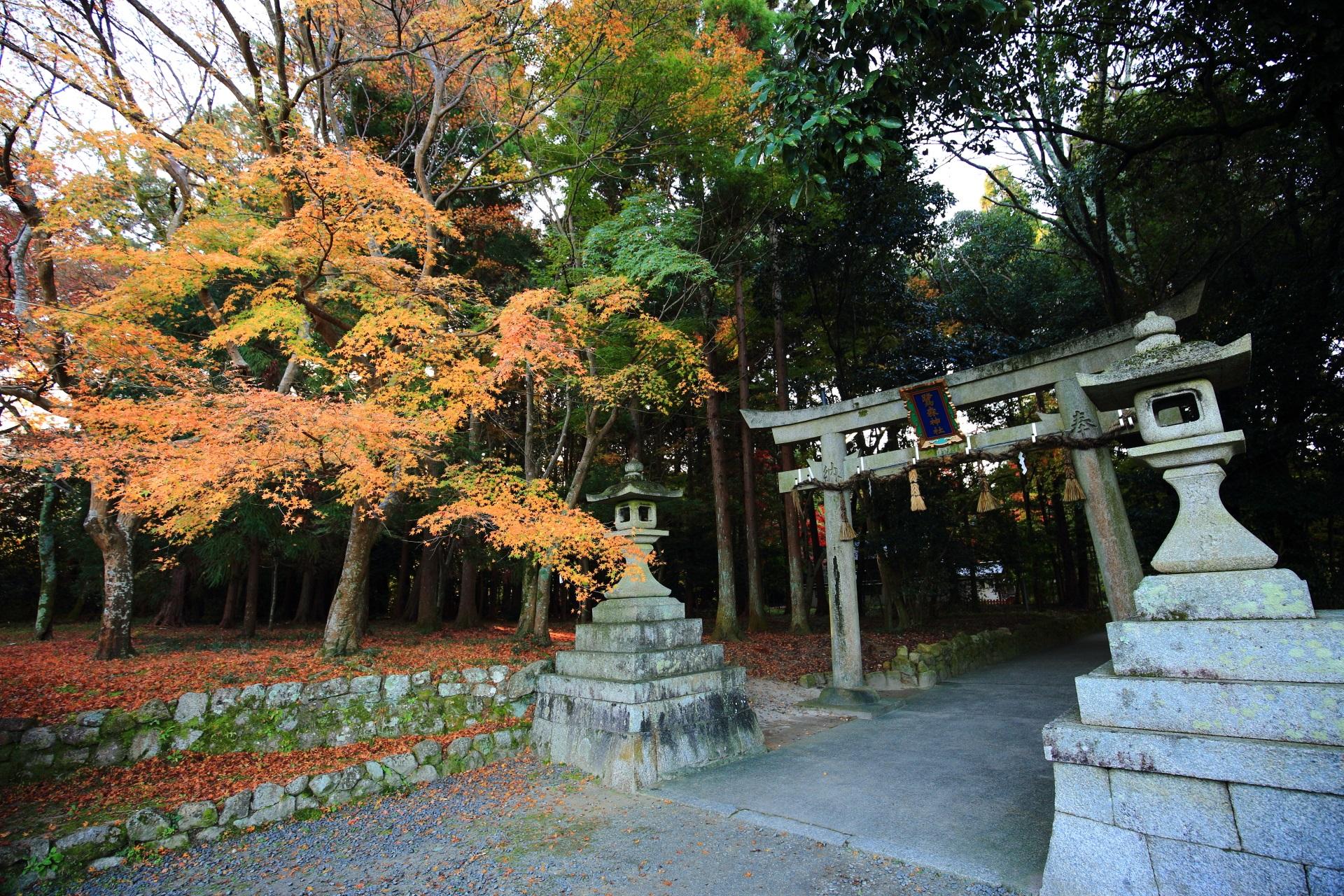 鷺森神社の境内北側の入口の鳥居と淡い秋色の紅葉