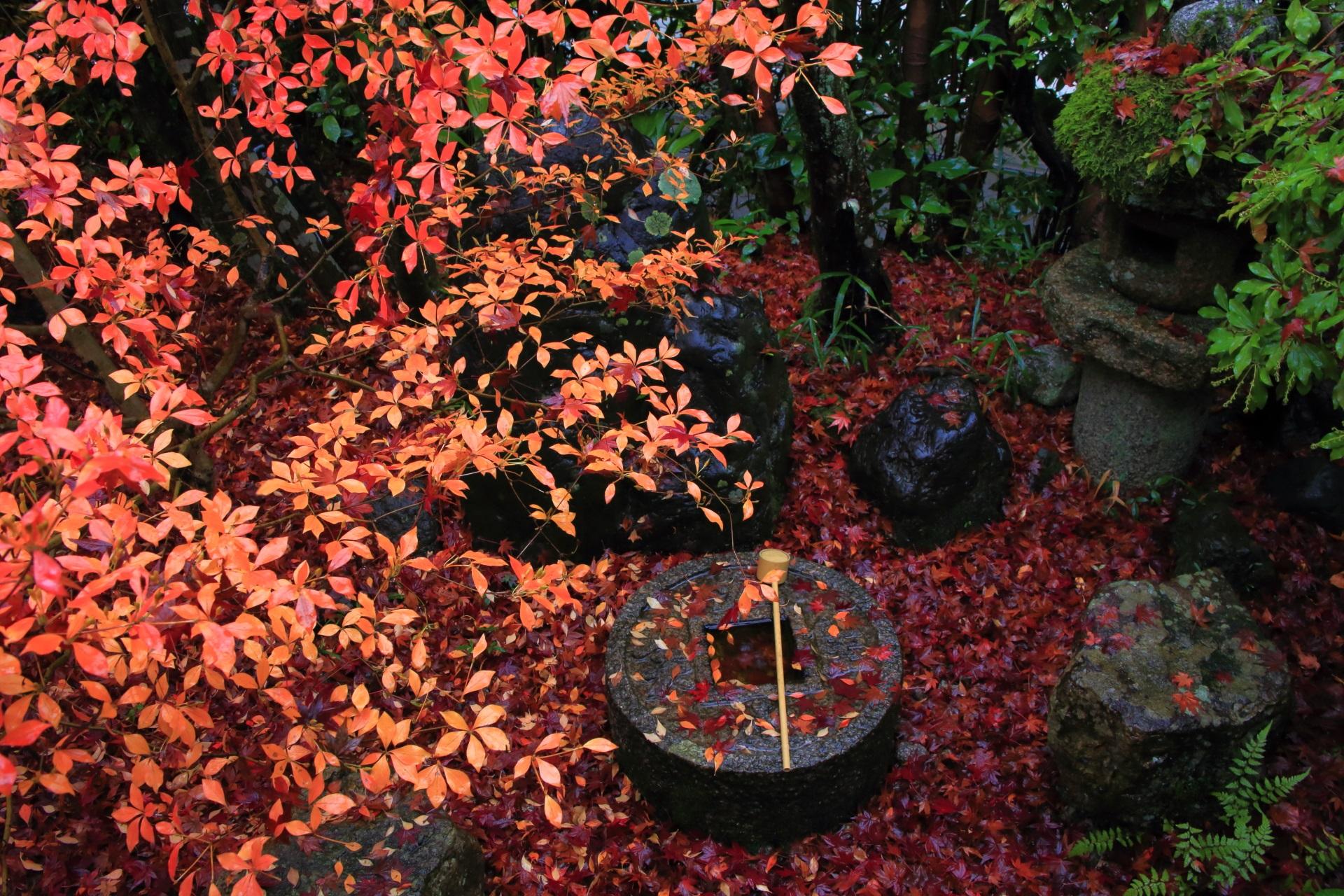 華やかで風情ありすぎる晩秋の情景