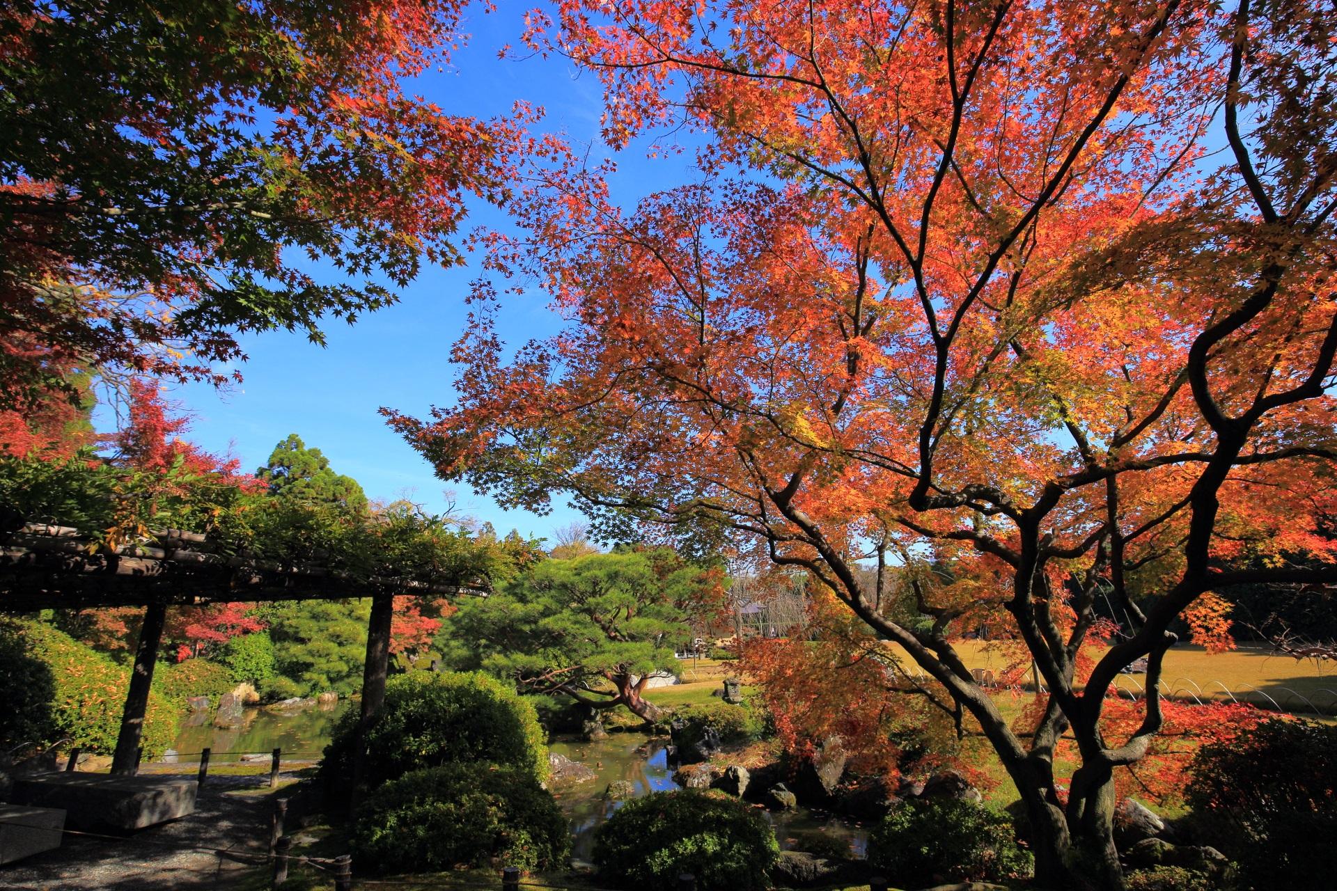 城南宮の素晴らしい紅葉と秋の情景に感謝