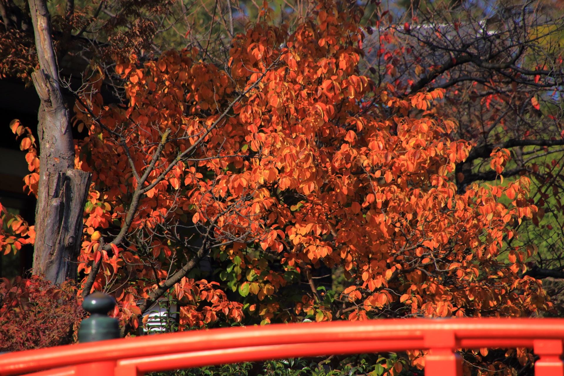 華やかな彩りに染まる法成橋