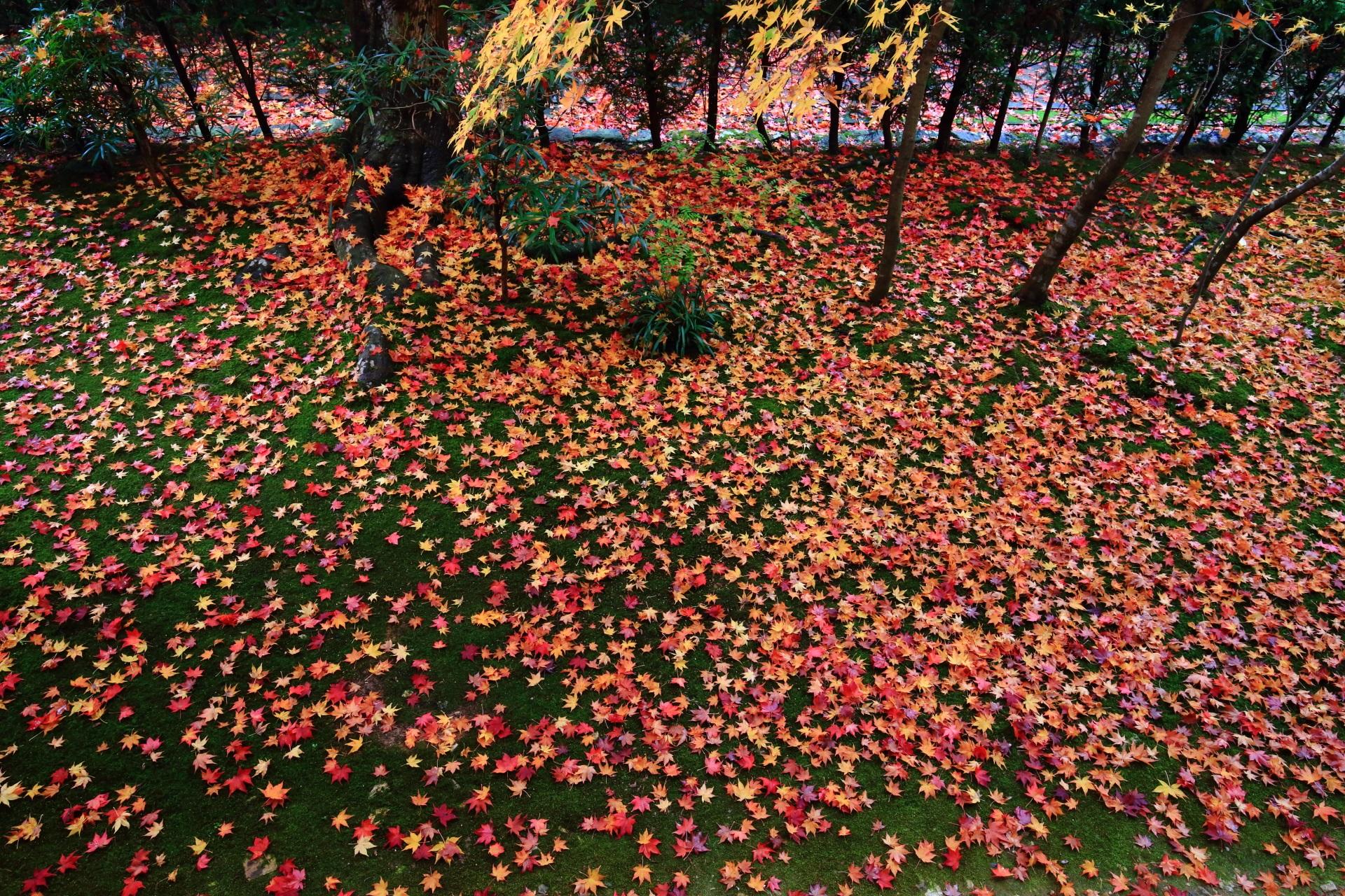 緑の苔を覆う色とりどりの散り紅葉