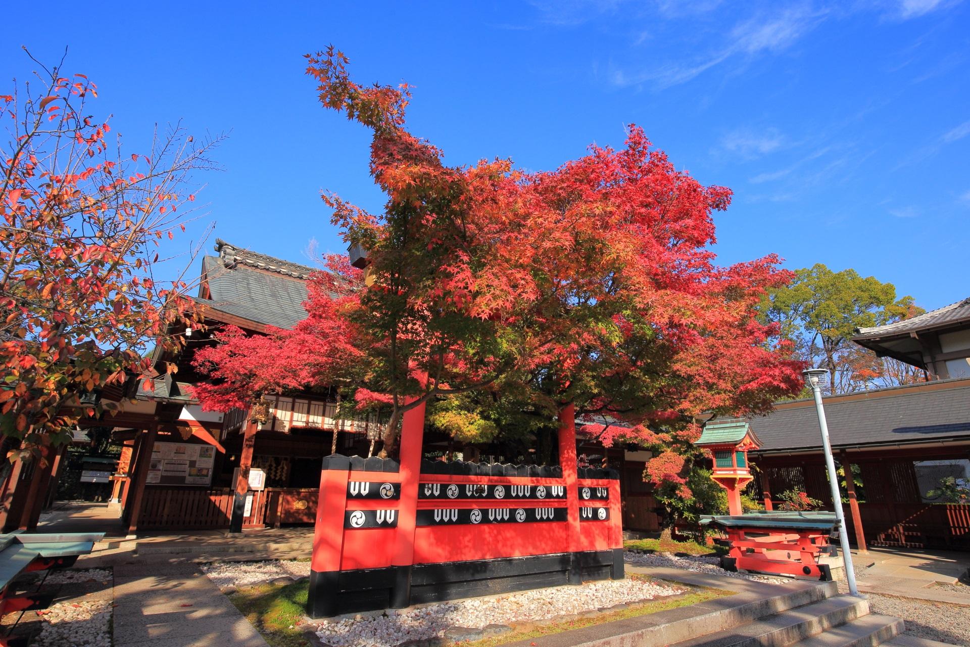 車折神社の青空に映える鮮やかな紅葉