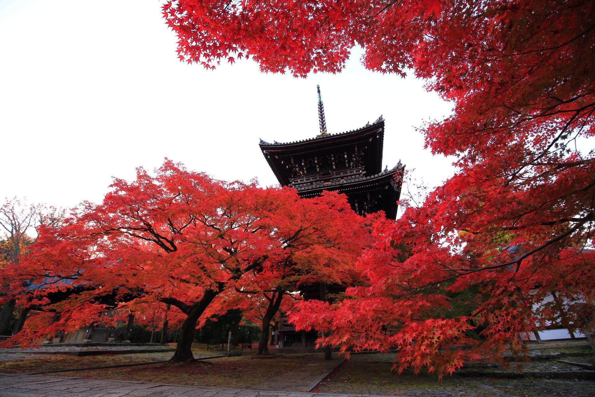 真如堂の三重塔を豪快に彩る立派な紅葉