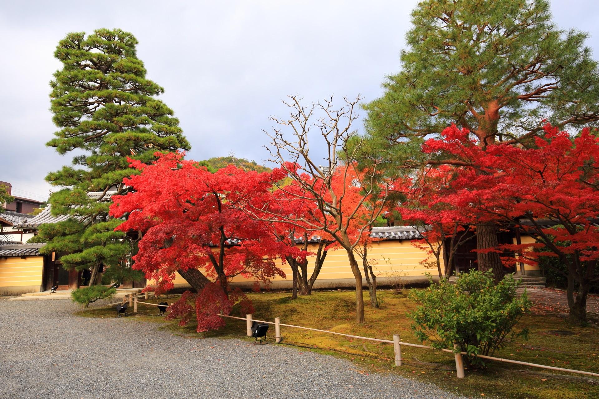 等持院の表門前の真っ赤な紅葉