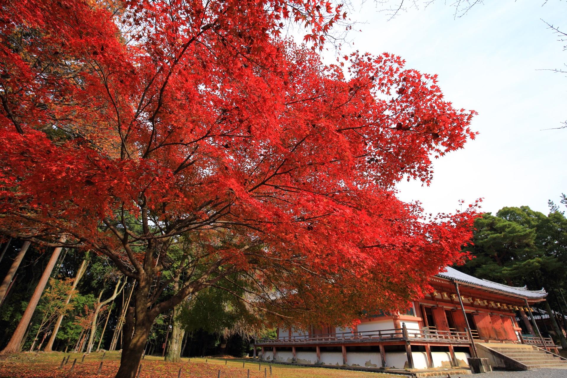 醍醐寺の金堂と絵になる迫力の紅葉
