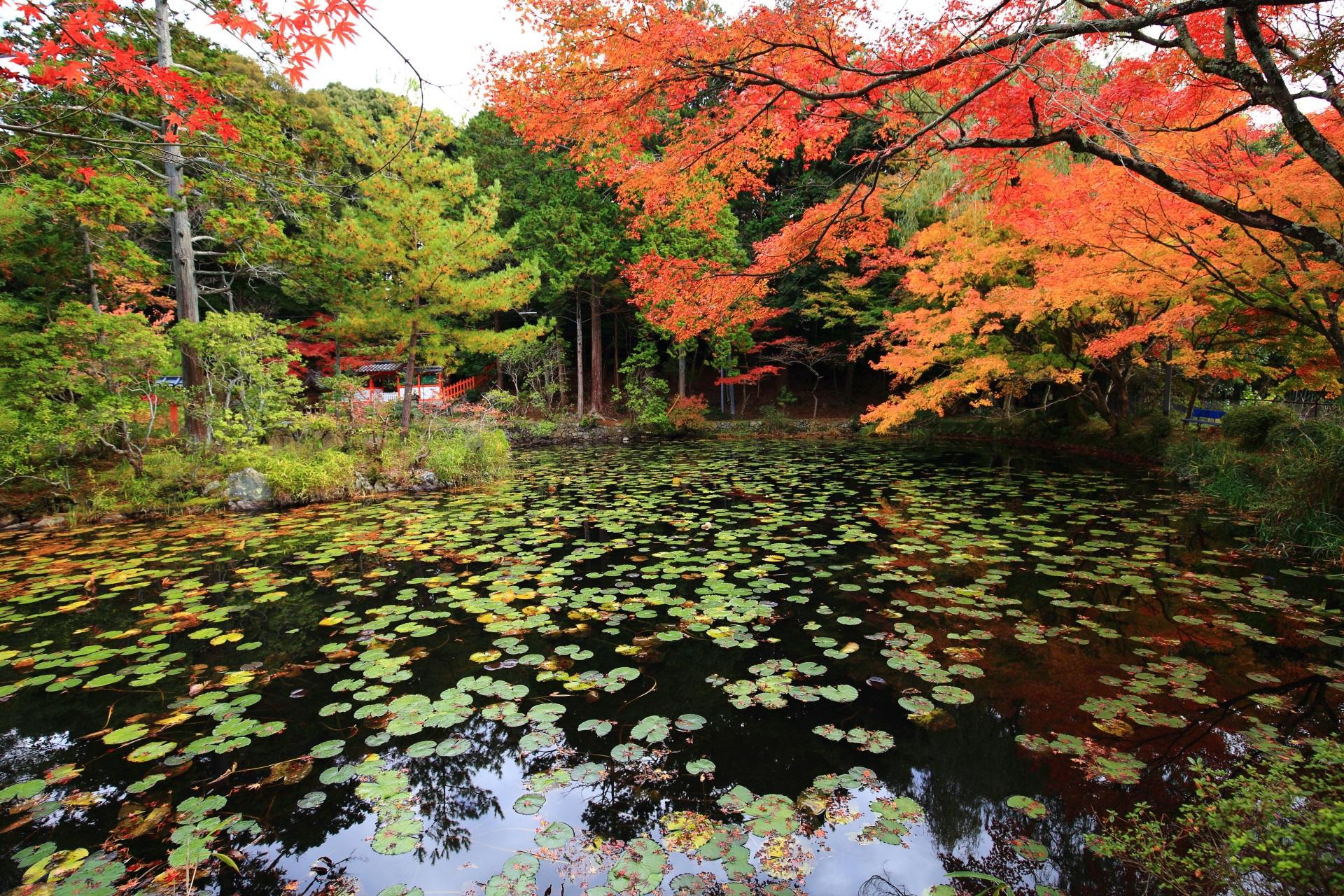淡い緑や水辺を華やぐオレンジや赤の鮮やかな紅葉