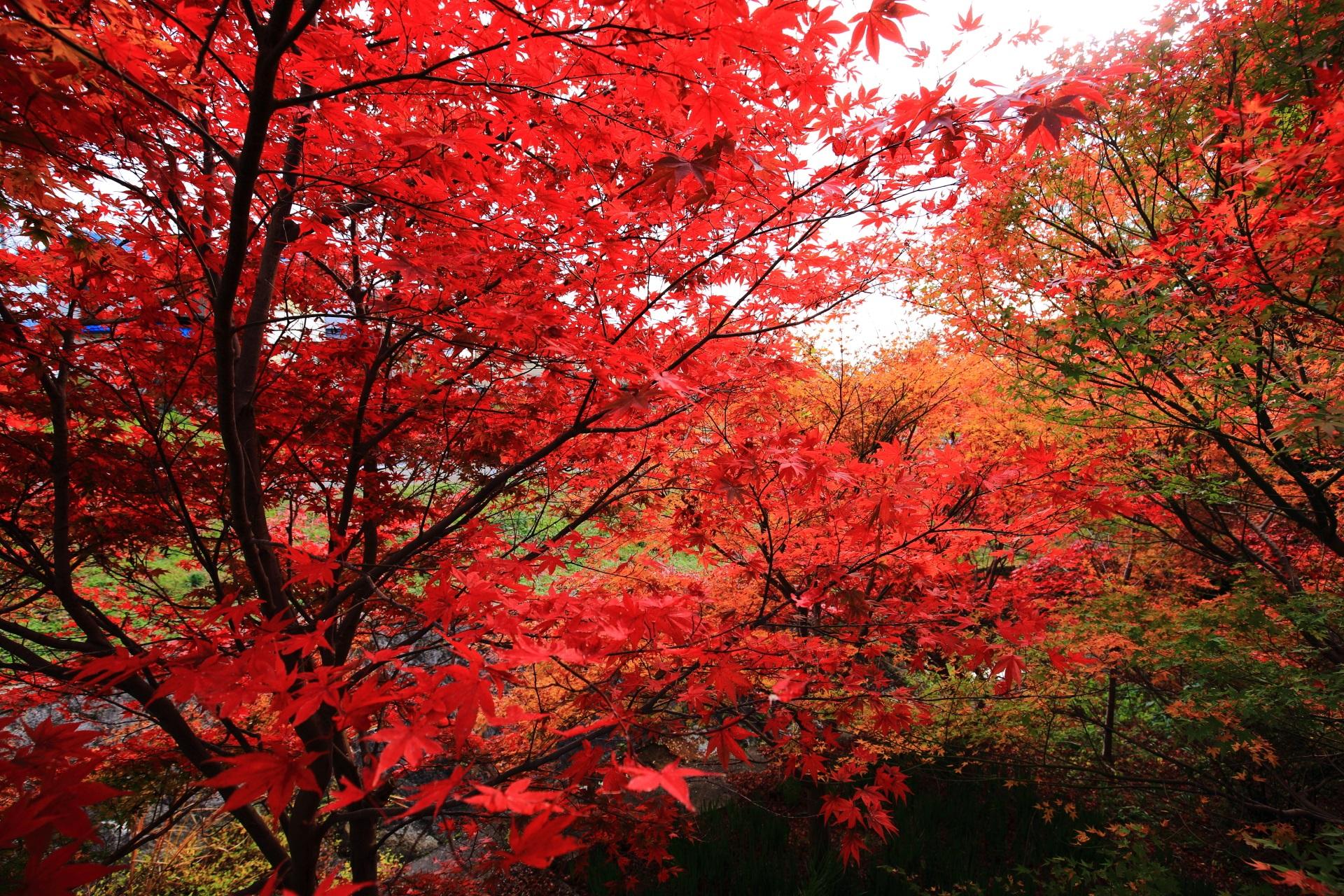 正法寺の極楽橋の鮮やかな秋色の空間