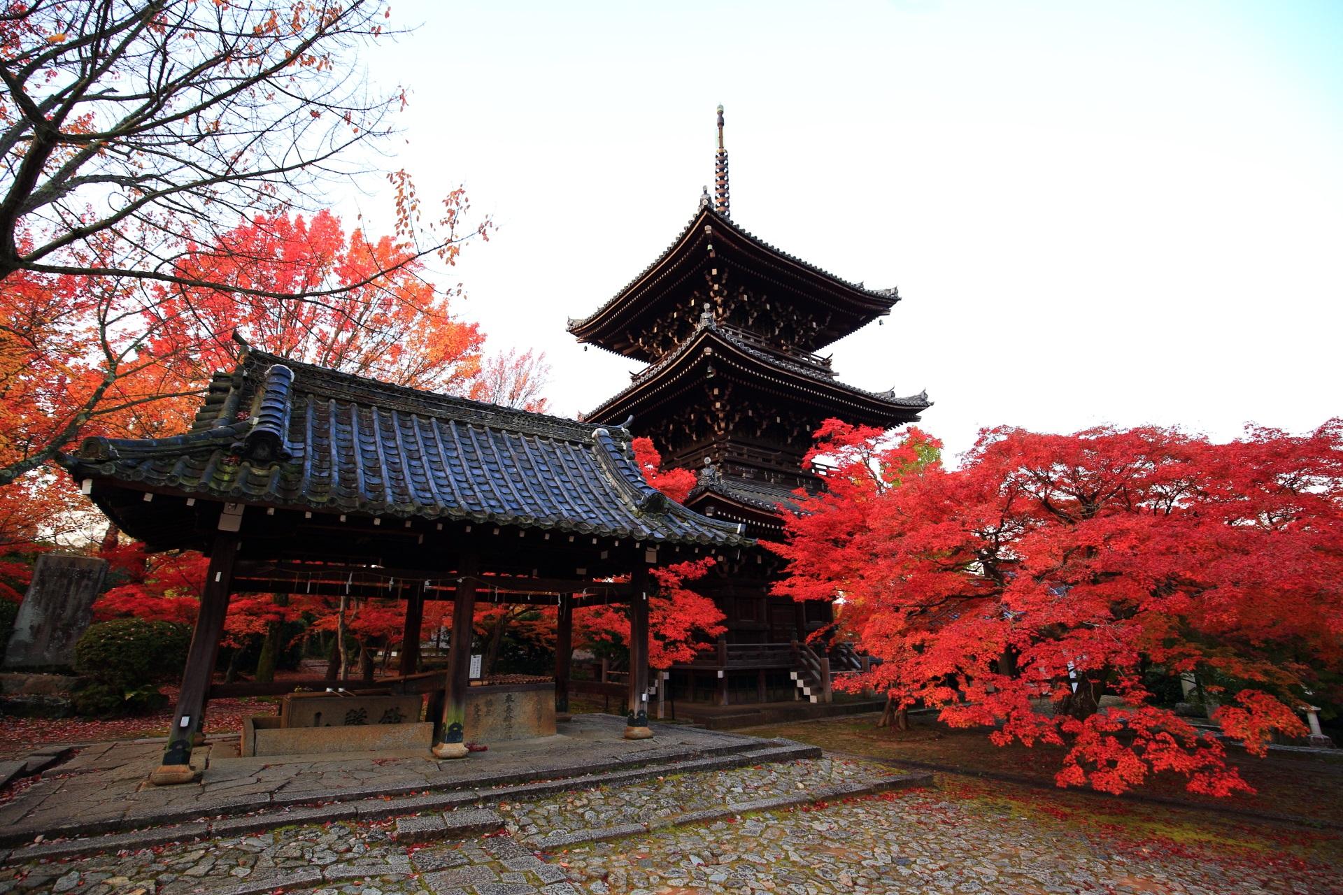 豪快な彩りにつつまれる秋の真如堂
