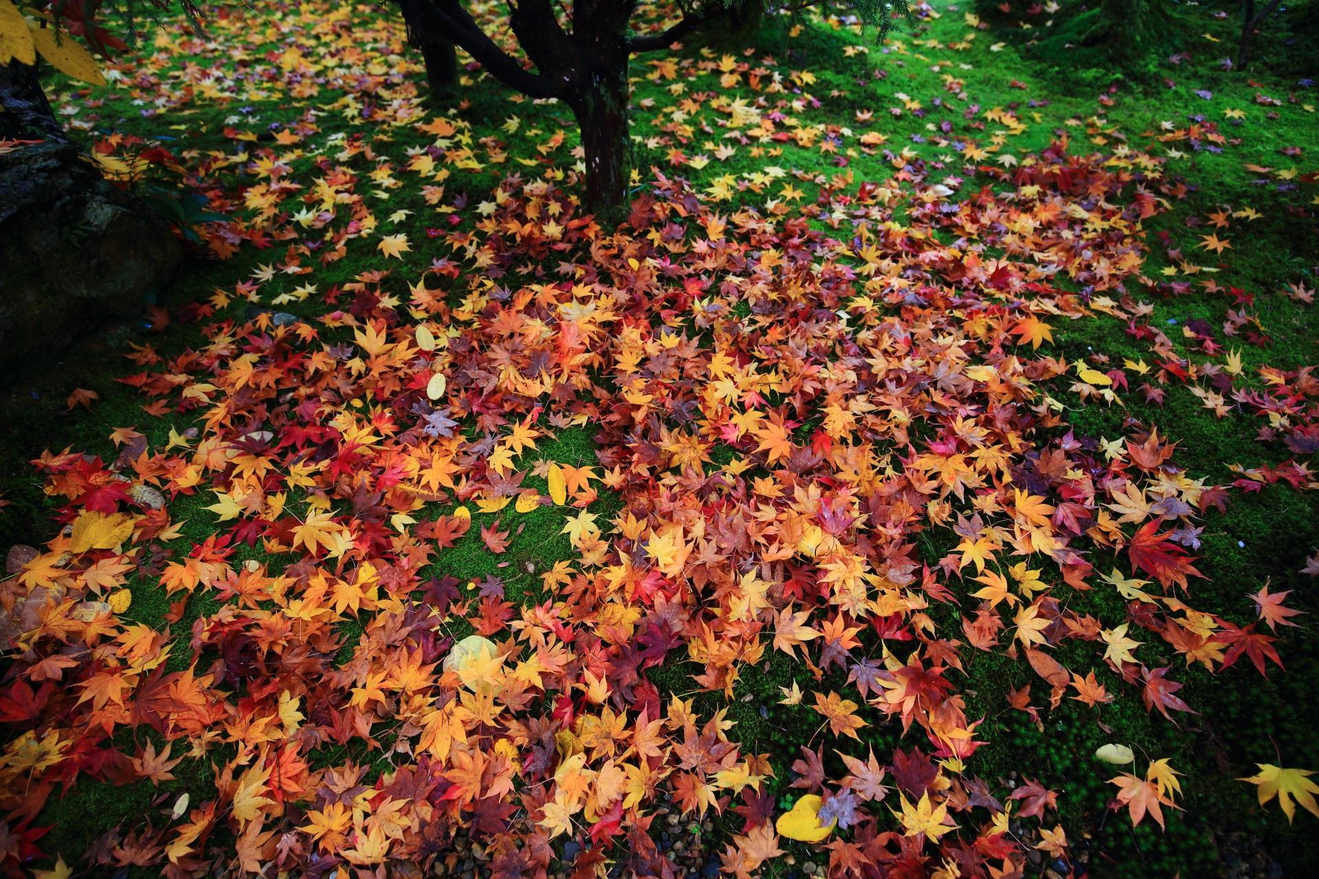 緑の苔の上の見事な色とりどりの散りもみじ