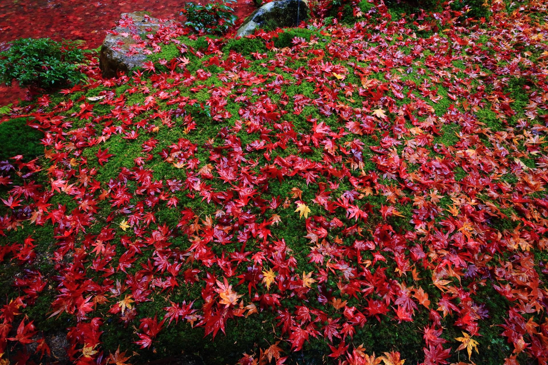 南禅院の鮮烈な彩りの絶品の散りもみじ