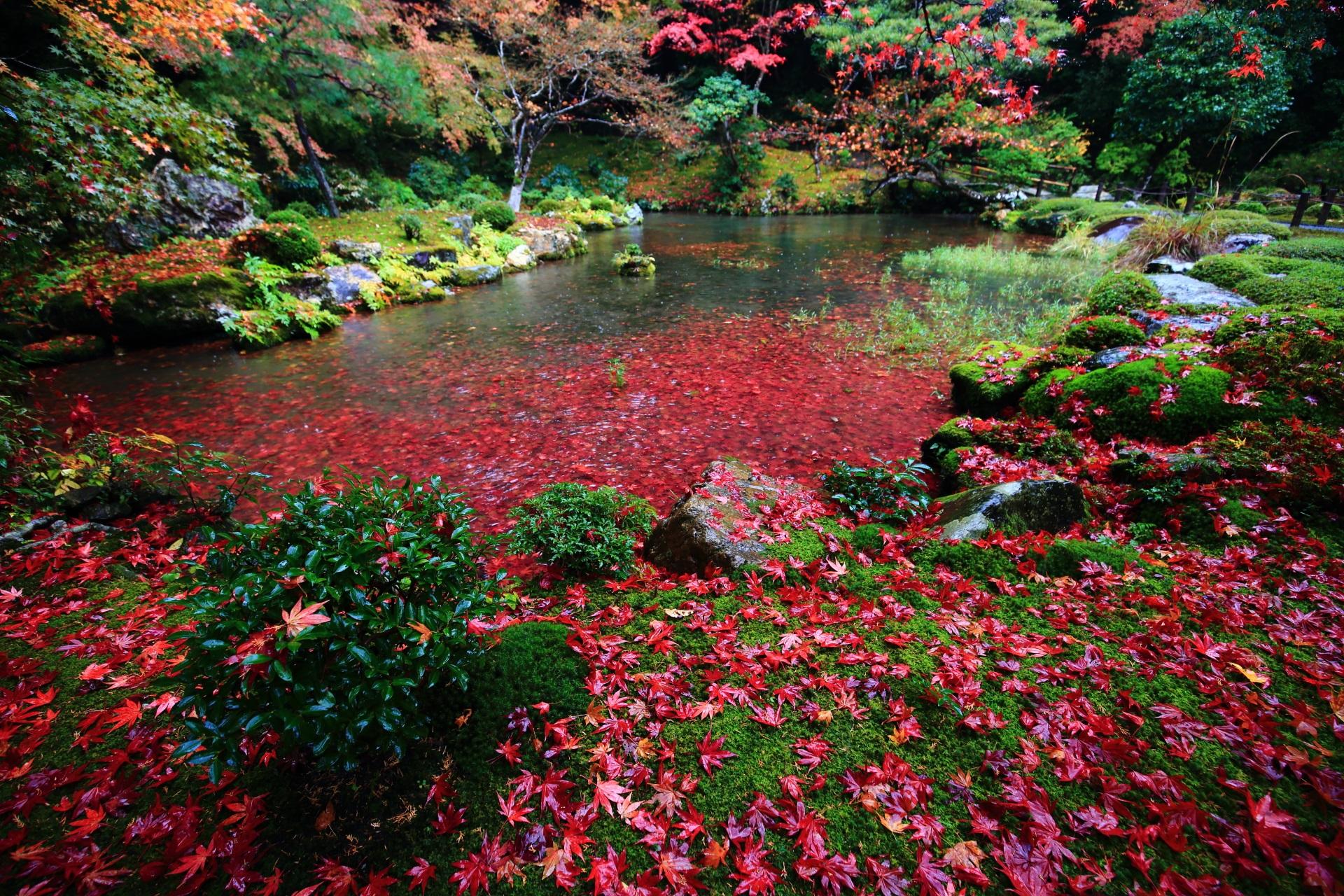南禅院の素晴らしすぎる紅葉や散りもみじと秋の情景