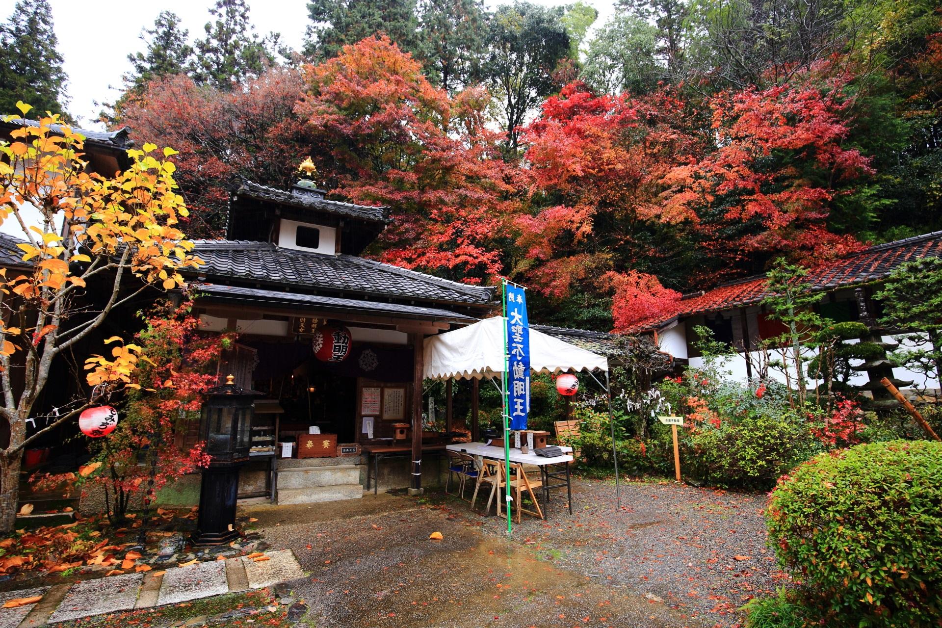 山科聖天の本堂と溢れる深い色づきの紅葉