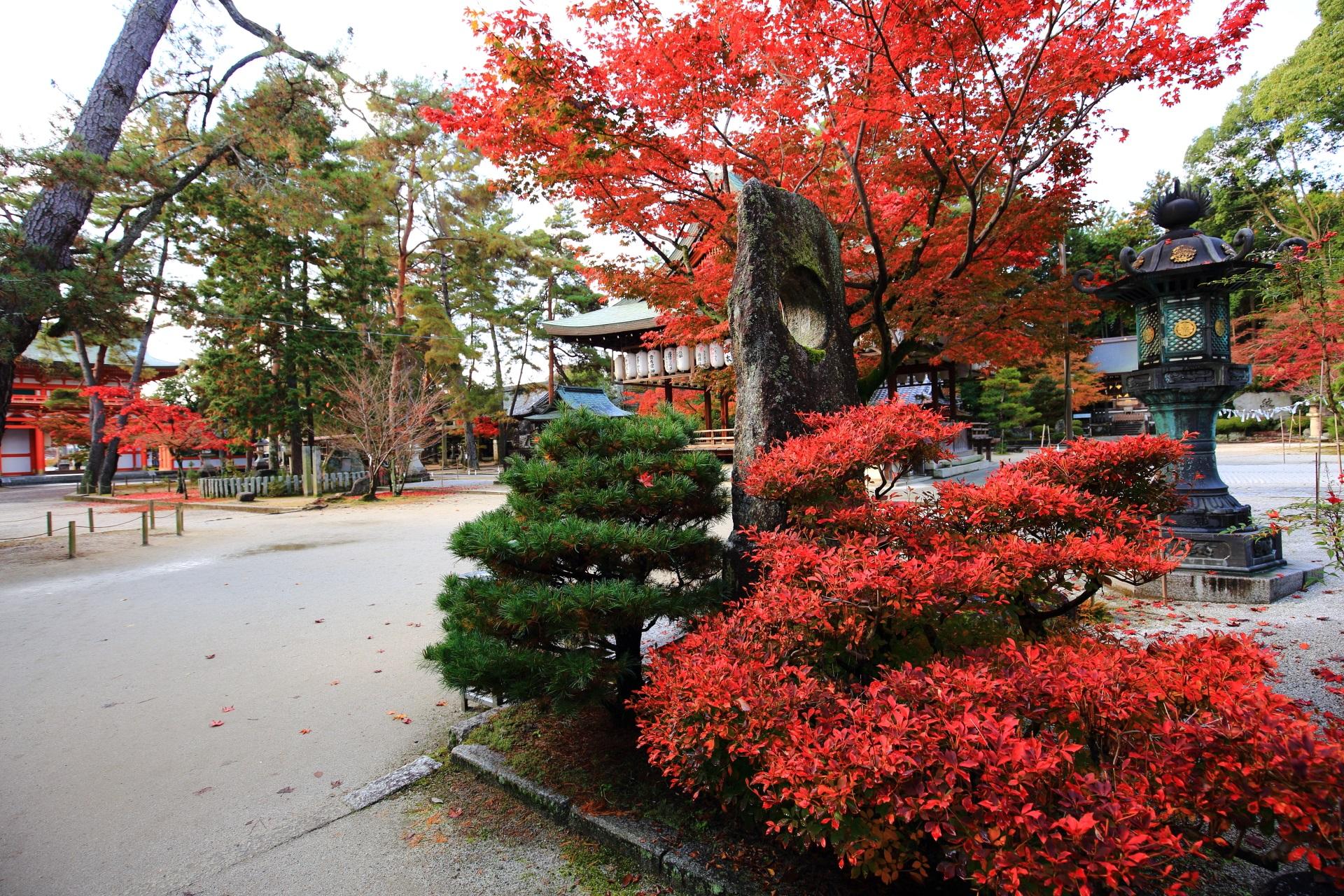 見事な秋色につつまれる今宮神社の境内とツツジの紅葉